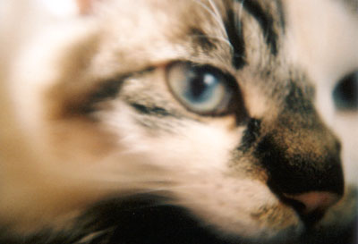 beautiful eye(LOMO LC-A)