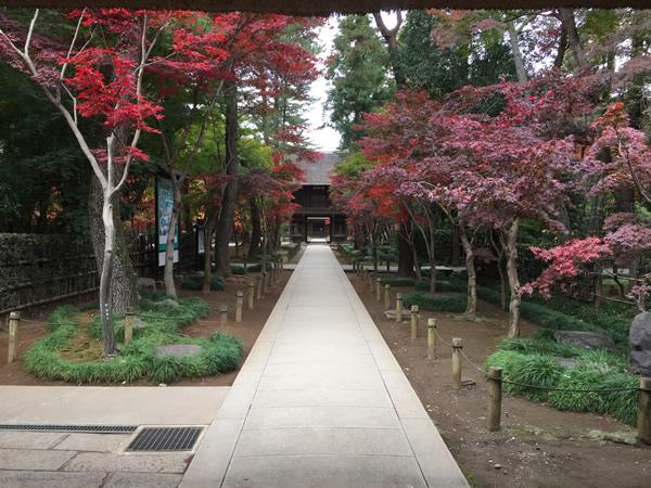 平林寺 紅葉
