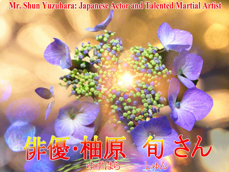 花のガクアジサイの写真