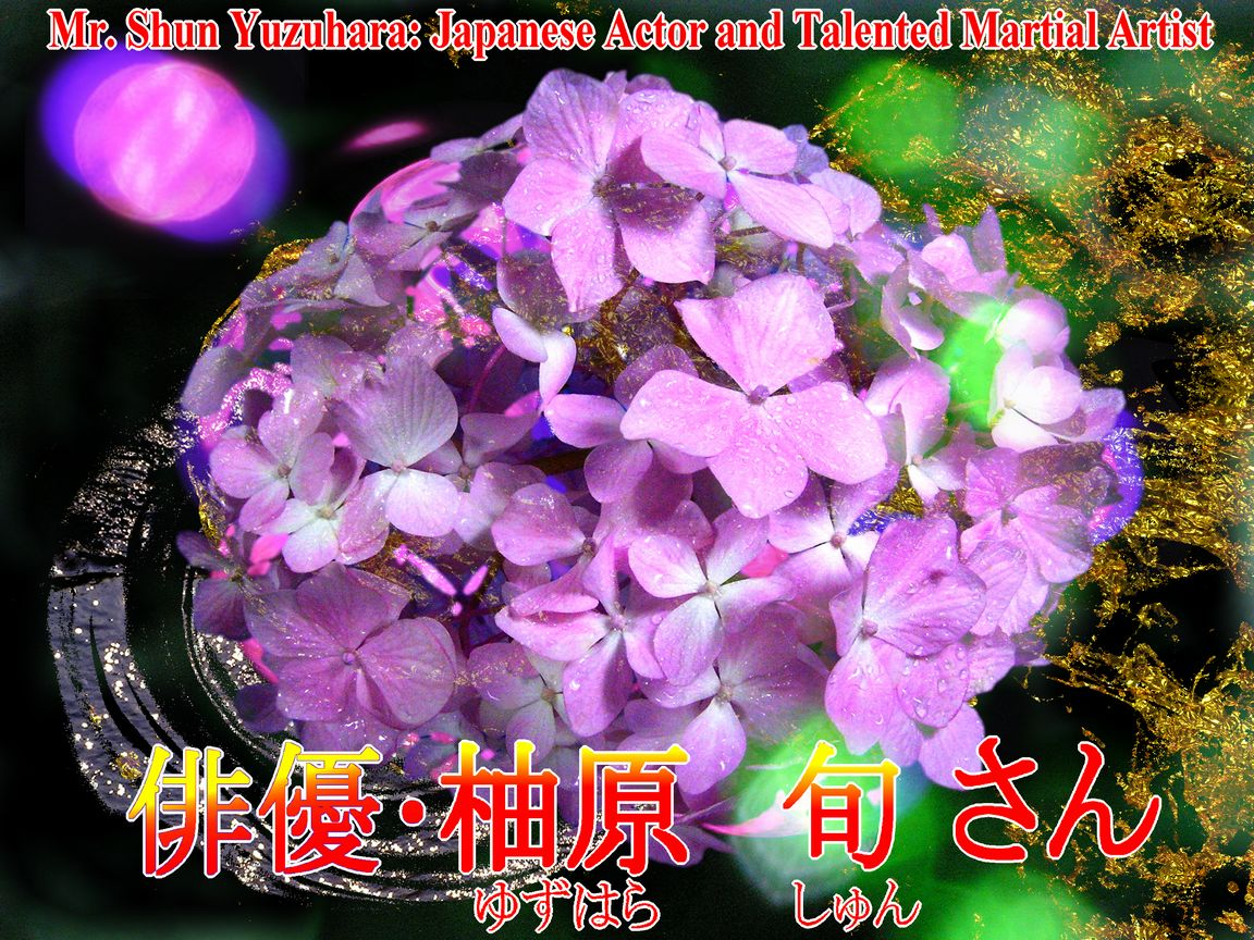 花のセイヨウアジサイの写真