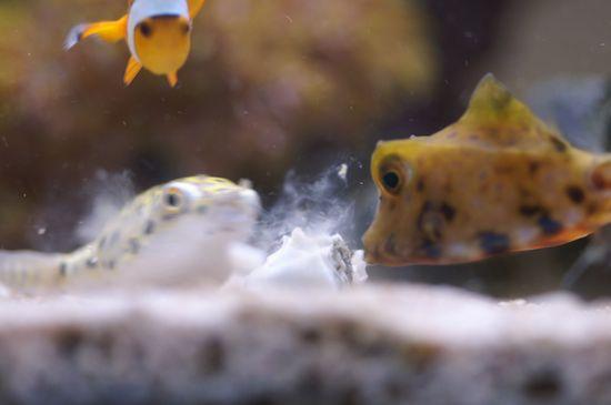 おおお!牡蠣じゃ〜♪