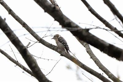 s-20190421-bird-gerdenIMG_1333-2 - コピー.jpg