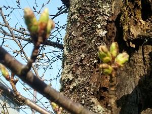 2012-04-04 16.11.14.jpg