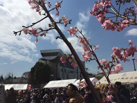 大岡山さくらまつり2016