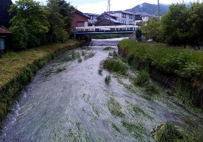 増水する西田川(清田町橋詰)