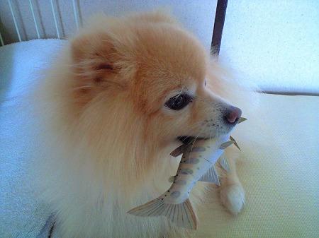 魚をくわえた犬