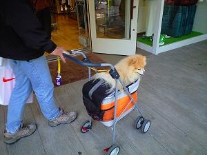 幸太と買い物中