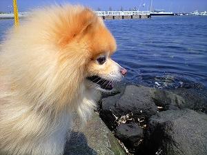 幸太、海に怖がっていた
