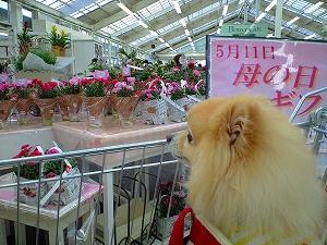 花選びに参加