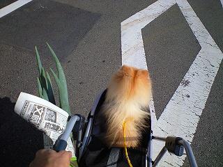 幸太の散歩道