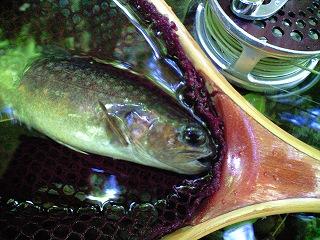 みつの岩魚