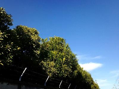 真っ青な空がうれしい〜♪