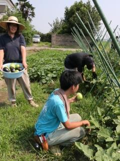 野菜の収穫(テクノ・ホルティ園芸専門学校) (1).jpg