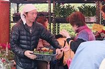 パンジー・ハボタン・寄せ植えの販売(テクノ・ホルティ園芸専門学校) (6).jpg