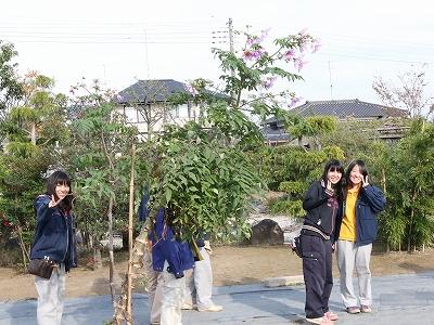 皇帝ダリア(テクノ・ホルティ園芸専門学校) (2).jpg