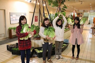 野菜の収穫(テクノ・ホルティ園芸専門学校) (2).jpg