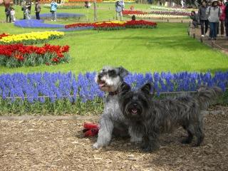 花とヴェとヴィ