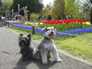 花とヴィとヴェ