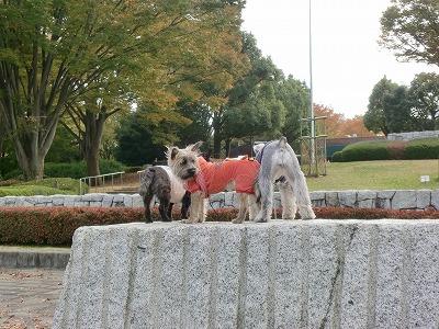 昭和記念公園後ろ