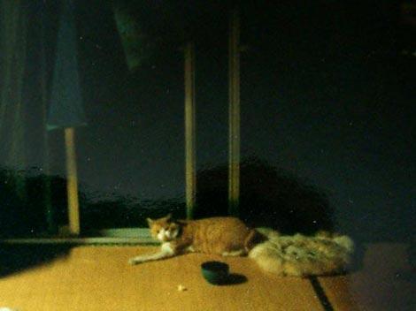 1998aki_08.jpg