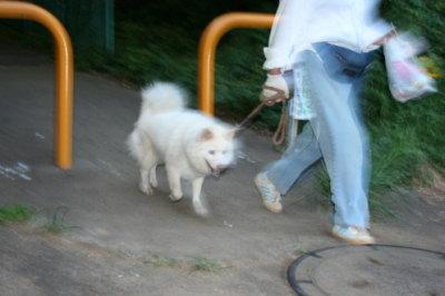 雑種の白い犬画像