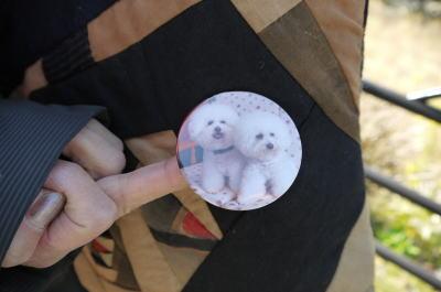 ビションフリーゼの多頭飼い画像