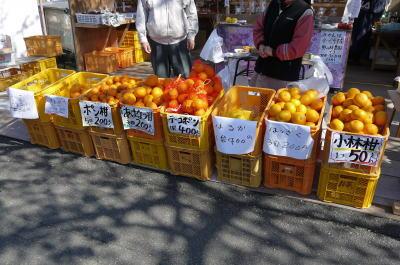 柑橘類画像