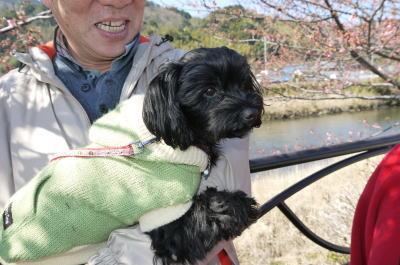 ヨークシャテリアとトイプードルのミックス犬画像