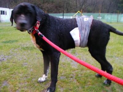被災した保護犬画像