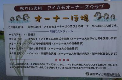 アイガモ(合鴨)農法画像