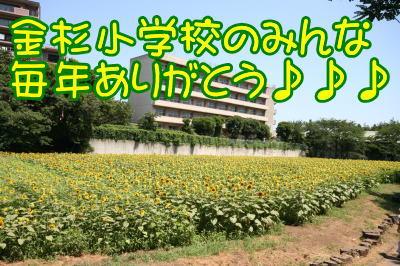 ひまわり畑画像