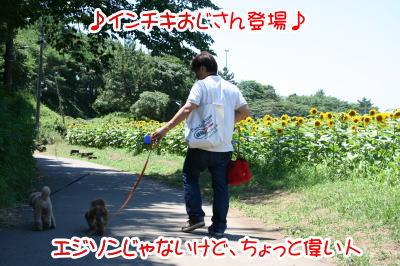 トイプードル成犬とミニチュアダックス成犬画像
