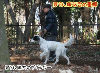 ポインター白黒成犬画像