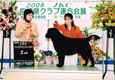 ラブラドールブラック(黒ラブ)JKCチャンピオン成犬オス画像