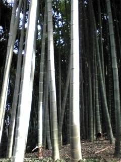 竹林20132月