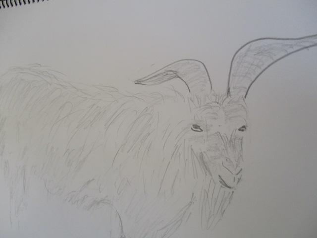ヤギのチムール