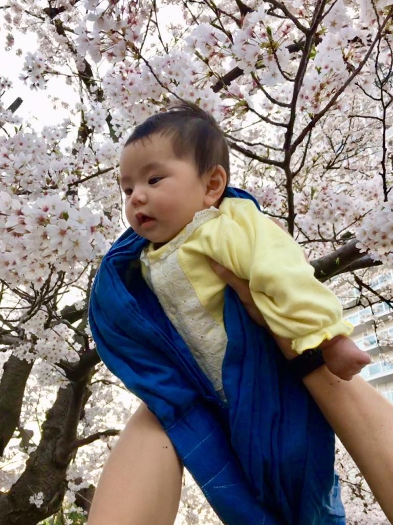 晴南ちゃん桜に出合う