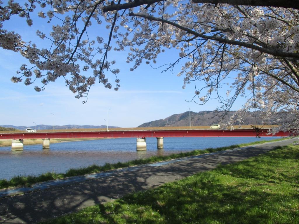 開北橋と満開桜
