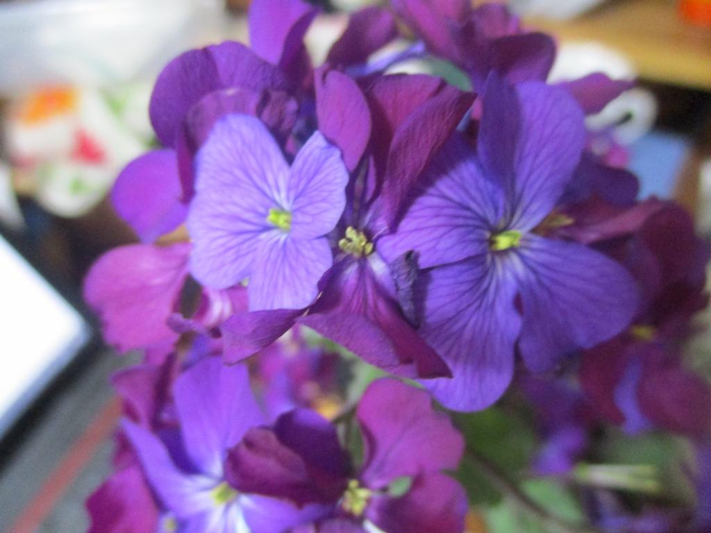 なばな?紫