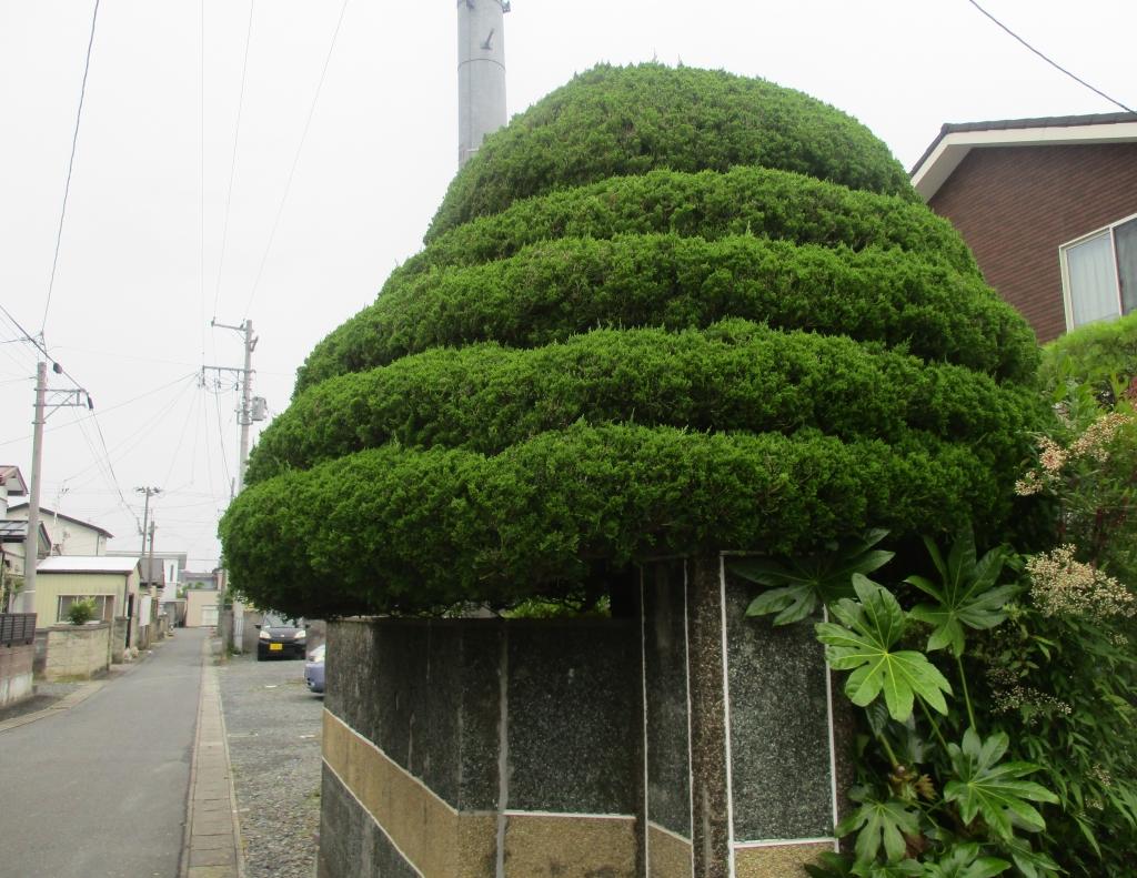 だんだんの木