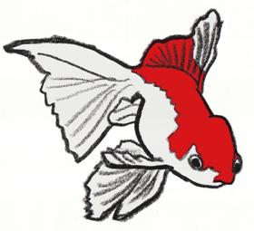 金魚1.jpg