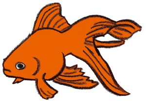 金魚3.jpg