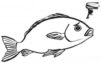 78困った魚1.jpg