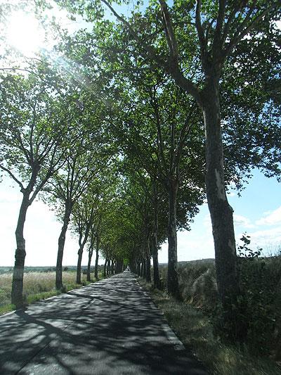 プラタナの並木