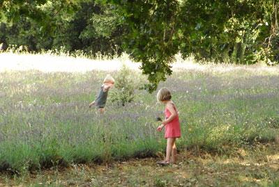 ラヴェンダー畑、ドローム地方3