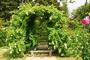 秘密の花園、石のベンチ