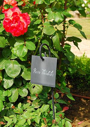 秘密の花園、手書きの名札