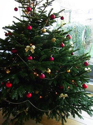 今年のツリー一号