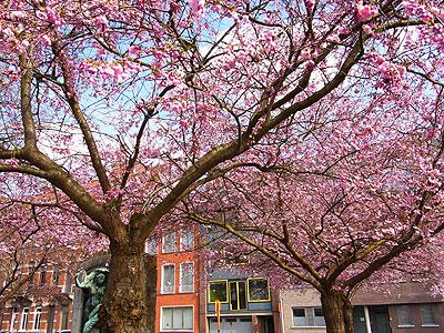 2010年の桜2