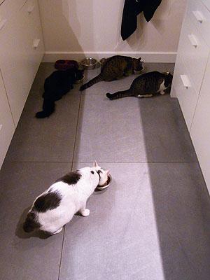 猫相関図2